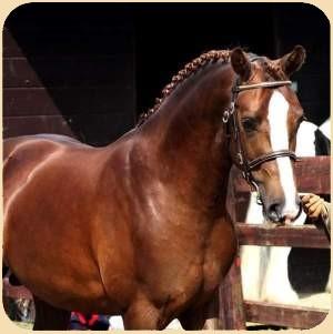 Lauren Essex Horse 1 BB